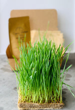 cancer fighting vegetables, Organic, Wheatgrass, Singapore, grow, cat grass, clear digestive track for cats, cats stomach, help, natural food for cats,