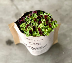 Starter Kit: Micro Salad Mix Grow Bag - Set of 3