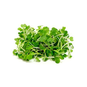 Buy the largest variety of microgreen micro green seeds in Singapore