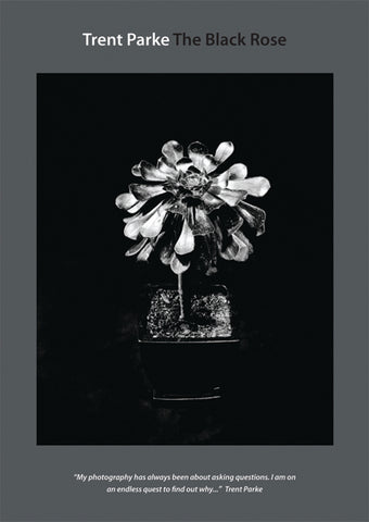 Trent Parke: The Black Rose DVD