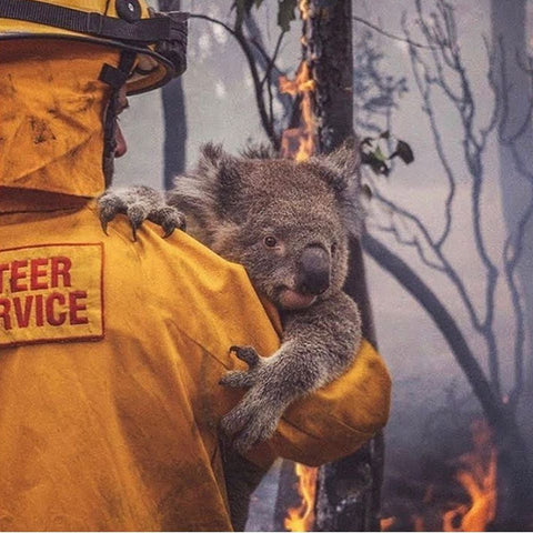 Koala rescued from Australian Bushfire