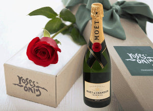 Single Red Rose Gift Box & Champagne