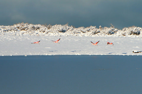 Snow with birds
