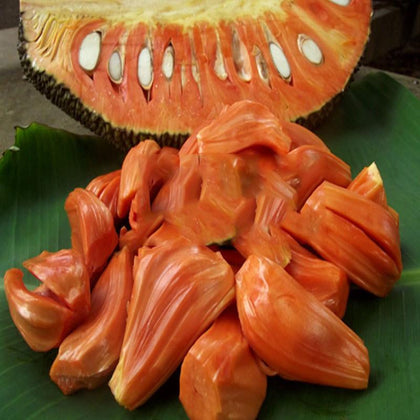 The jackfruit, also known as jack tree, fenne, jakfruit, or sometimes simply jack or jak, is a species of tree in the fig, mulberry, and breadfruit family native to South India