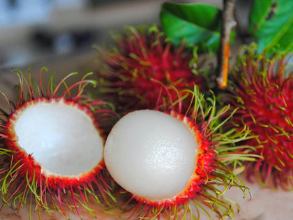 Rambutans are native to southeast Asia. Buy now in nurserykebunbandar.com!