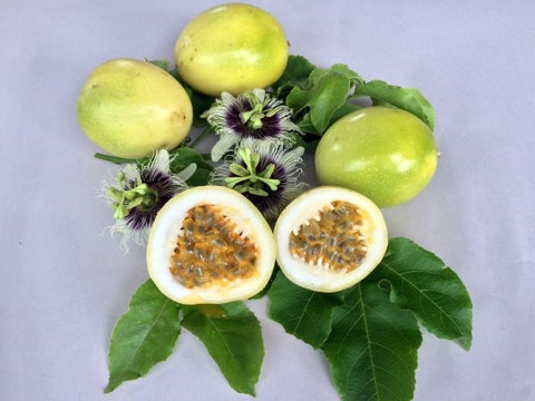 Panama Gold Passion Fruit - Malaysia Online Plant Nursery
