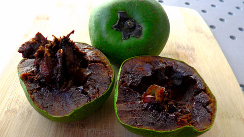 Black Sapote (a.k.a chocolate pudding tree) - Malaysia Online Plant Nursery