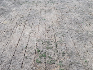 The Parched Earth Of Shepherd's Bush Cricket Club