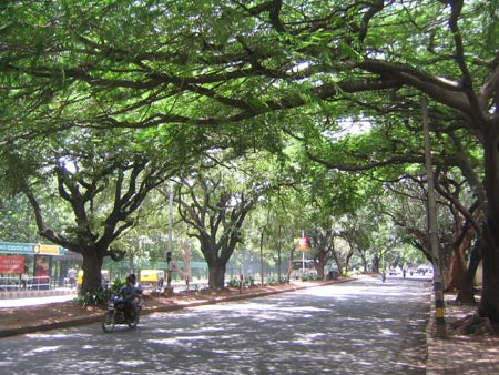 Australian Cricket Tours - Chandigarh Is India's Cleanest And Greenest Cities With Long, Wide Tree Lined Roads And Roundabouts