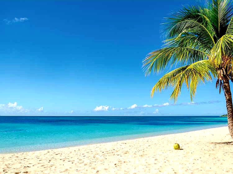Australian Cricket Tours - A Palm Tree Over The Tranquil Turquoise Waters Of Antigua
