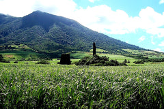 Australian Cricket Tours - A St Kitts Sugar Cane Plantation Through Which We Will Drive In 2021