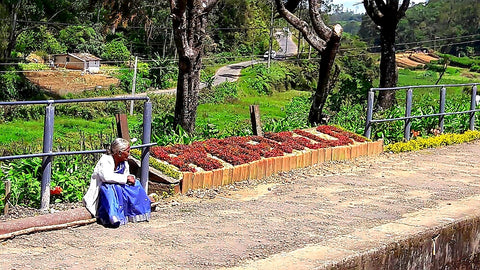 Australia Cricket Tours - Flower Beds Spell Out Station Names On The Platforms In Sri Lanka