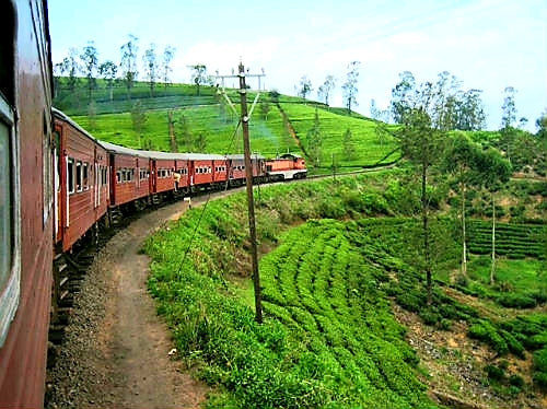 Australian Cricket Tours - The Slow Train Travelling From Kandy To Nanuoya Through The Tea Plantations