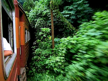 Australian Cricket Tours - A Train Punches Through The Foliage Entering A Hill Country Tunnel, Kandy, Sri Lanka
