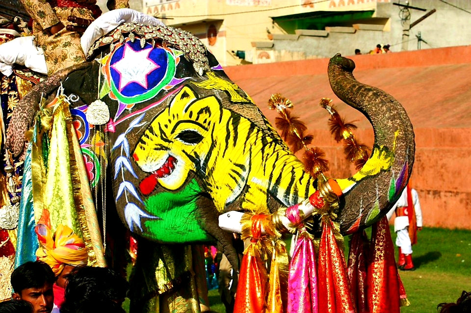Australian Cricket Tours - An Elephant Painted With Vivid Colour And Artistry At The Elephant Festival In Jaipur