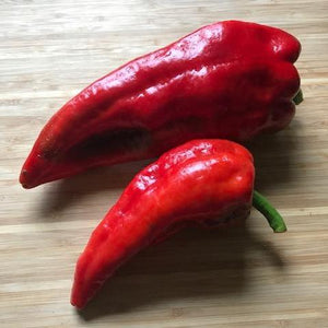 "PLANT: Beaver Dam Pepper - 4"" Pot - Local only - no shipping"