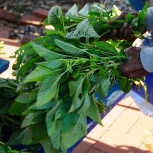 Callaloo (Amaranth)