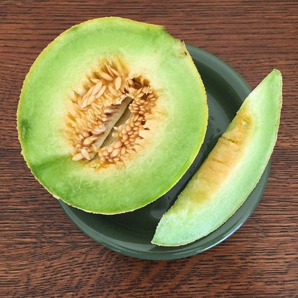 Green Nutmeg Melon