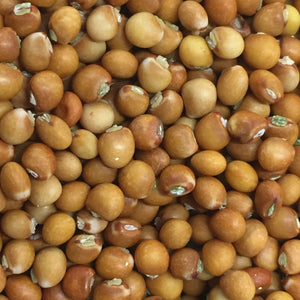 Northern Adapted Pigeon Peas (Gandules)