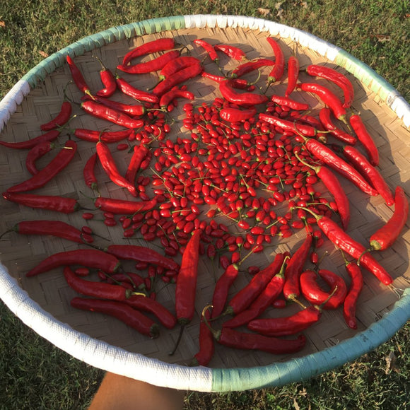 Carolina Cayenne Pepper