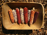 Daymon Morgan's Kentucky Butcher Dent Corn