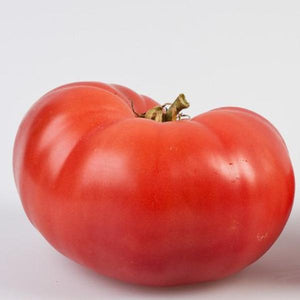 Redfield Beauty Tomato