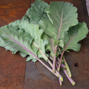 Alabama Blue Collards