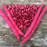 Frijol Rojo de Seda (Red Silk Bean)