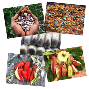 Seed Keeping: Resilience & Resistance greeting cards