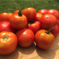Minsk Early Tomato