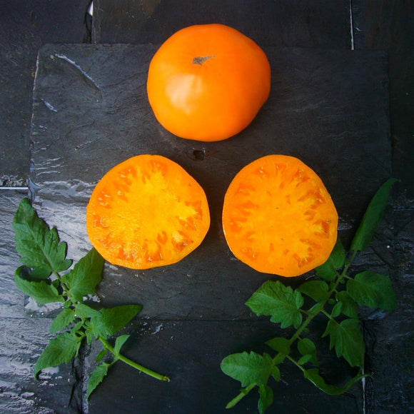 Mary Reynold's Orange Tomato