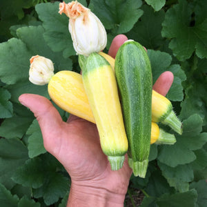 Palestinian Summer Squash Mix