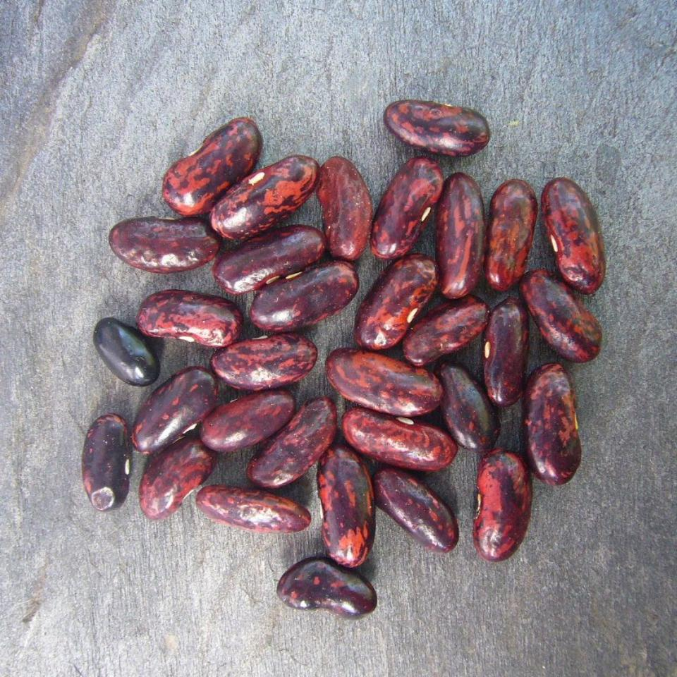 Haricot Rouge De Syrie Syrian Red Bush Bean Truelove Seeds