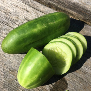 Syrian Smooth Cucumber