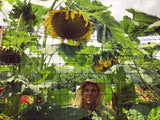 Transylvanian Giant Sunflower Mix