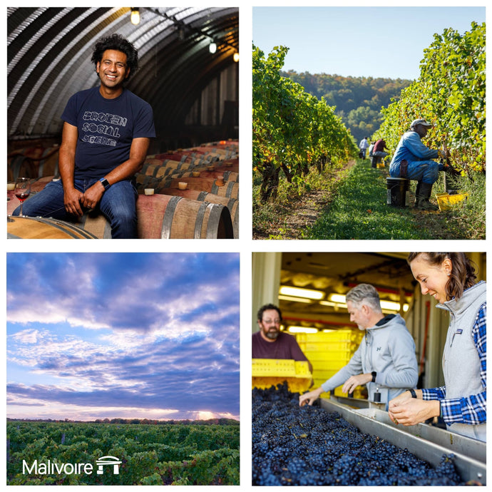 Reflections on the 2020 Vintage from Shiraz Mottiar
