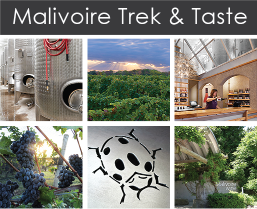 Trek & Taste - tour and tasting experience at Malivoire Wine Company on the Beamsville Bench, Ontario.