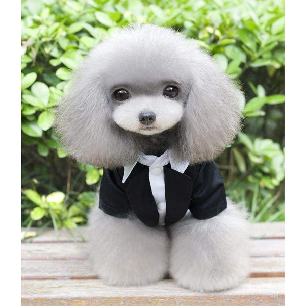 XS-XXL Gentleman Dog Apparel Cat Puppy Dog Wedding Suit Tuxedo Clothes Costume Spring Summer Pet Clothing Wear