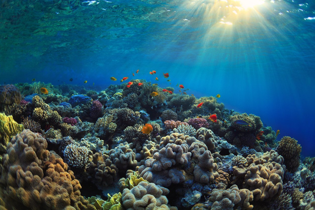 Reef Friendly Sunscreens: Why it Matters