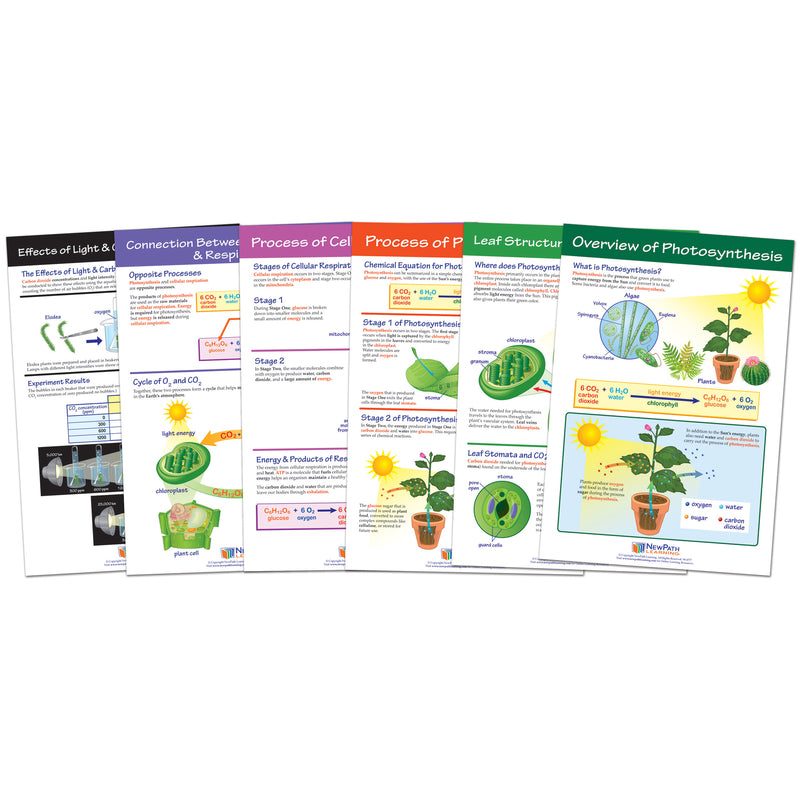 Photosysthesis Bulletin Board Chart Set Grades 3-5