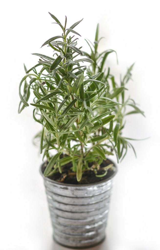 All Things Rosemary