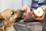 12 Human Foods That Are Actually Good For Dogs