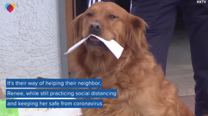 Dog delivers groceries to quarantined neighbor