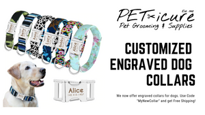 PET-icure Pet Grooming & Supplies Pepperell Massachusetts 01463 Dog Grooming Cat Grooming Peticure Dog Collars