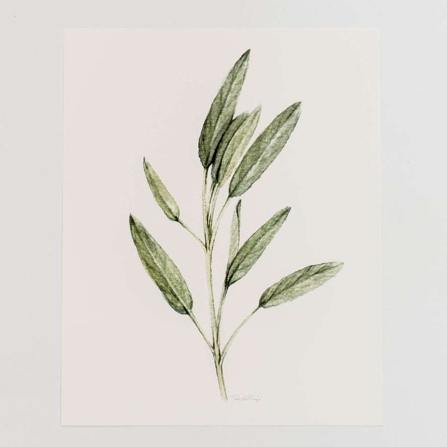 Herb Wall Art - Sage