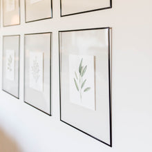 Herb Wall Art - Parsley