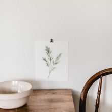 Herb Wall Art - Dill