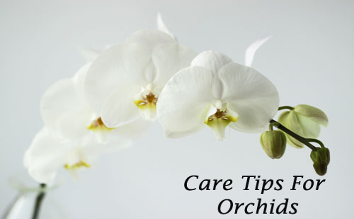 Care Tips For Orchid - Orchid Girl and Plants