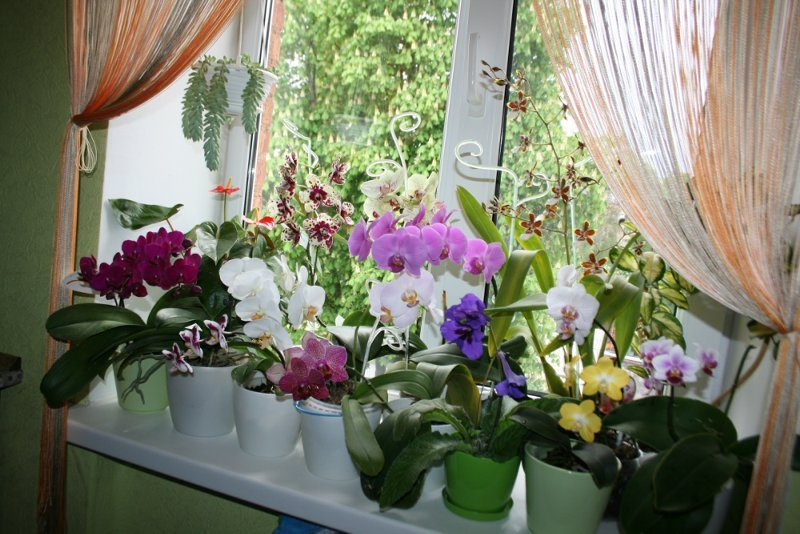 Benefits of Having Orchids in The House - Orchid Girls and Plants