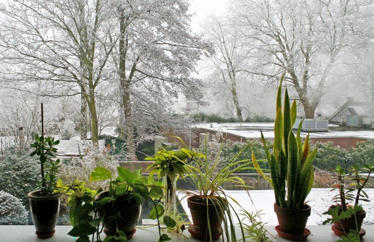Care Tips For Indoor Plants During Winter - Orchid Girl and Plants
